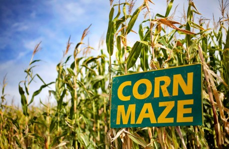 Join in the corn maze!